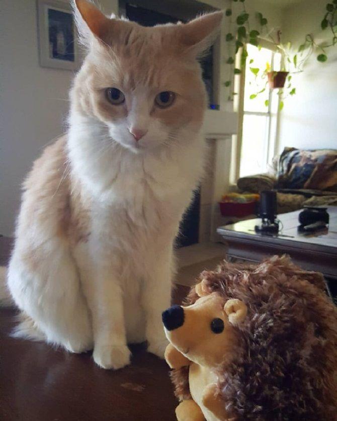 рыжий кот с игрушкой
