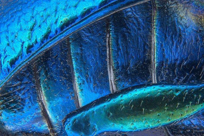 Листовой жук под микроскопом