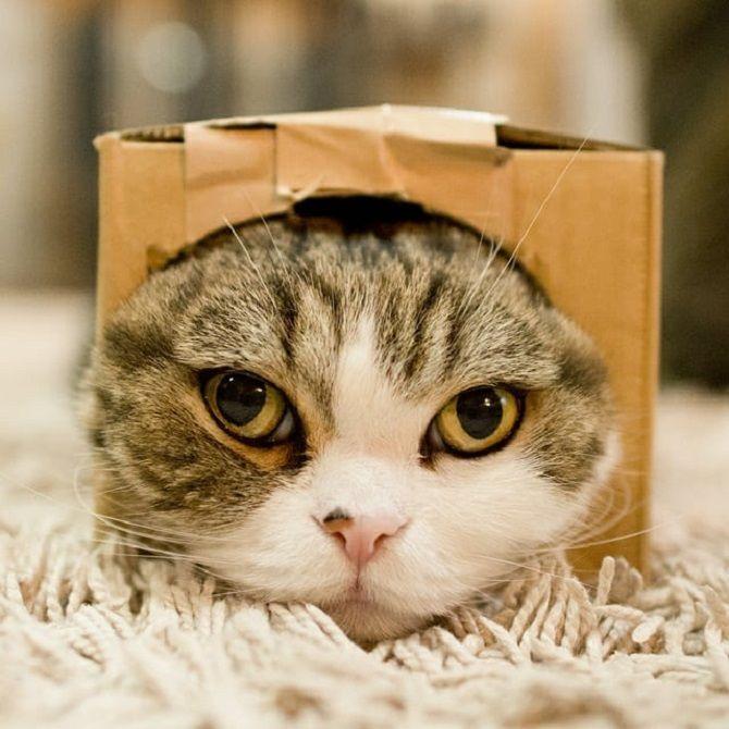 знаменитый кот Мару
