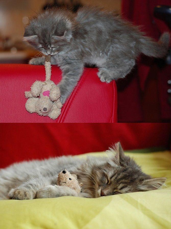 Наймиліші кішки, які дуже прив'язані до своїх іграшок 13