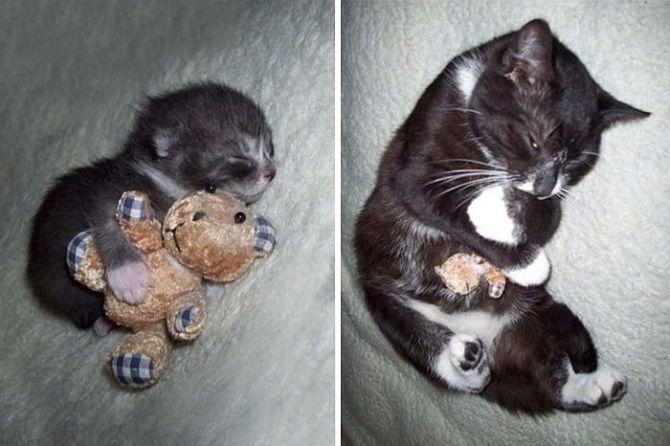 котик спит с мишкой