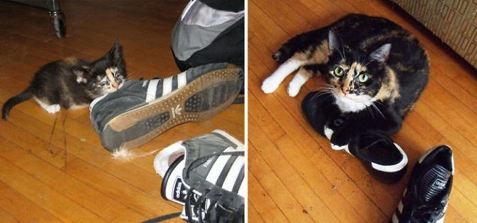 cat and a sneakers