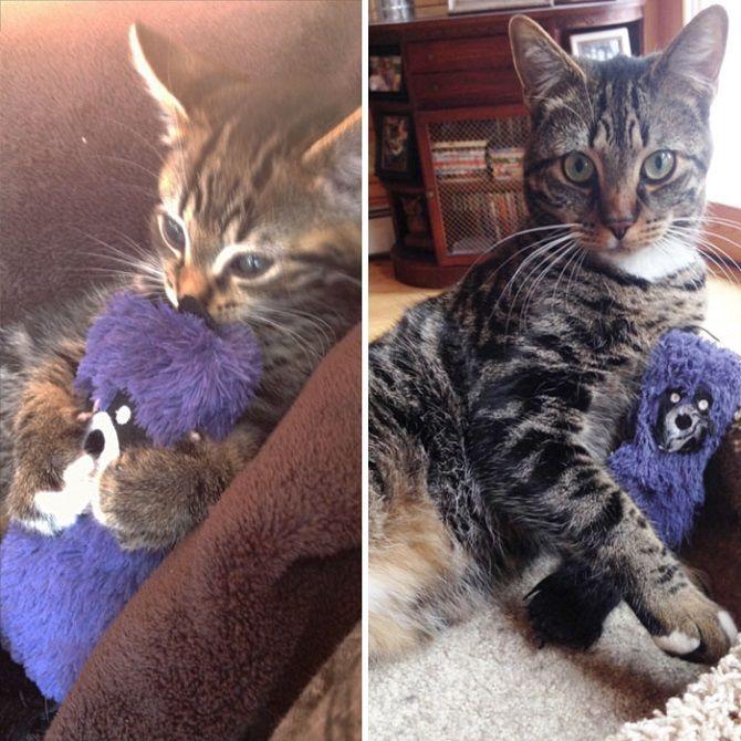 Наймиліші кішки, які дуже прив'язані до своїх іграшок 14
