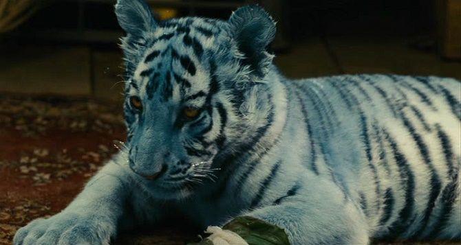фильм Синий тигр / Modrý tygr, 2012