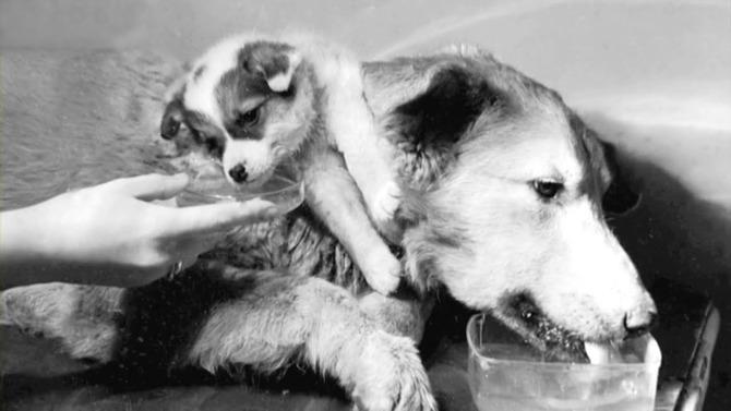 Експеримент з двоголовою собакою