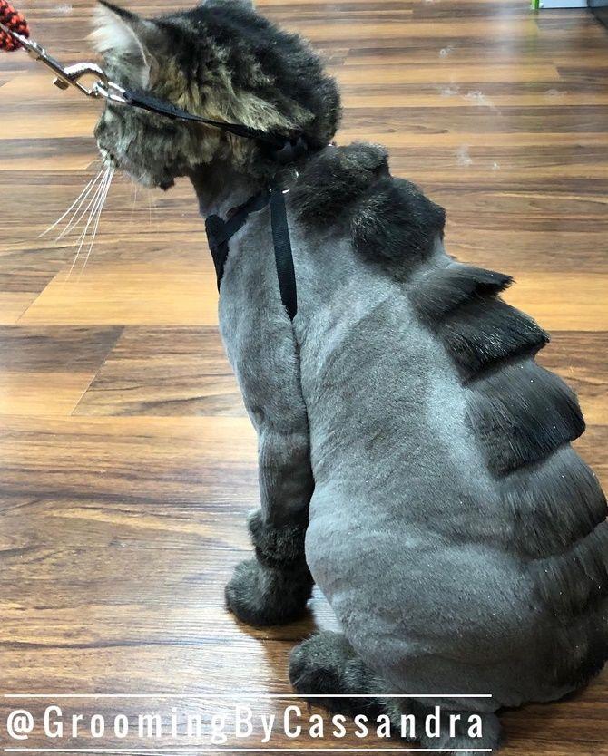стрижки котов