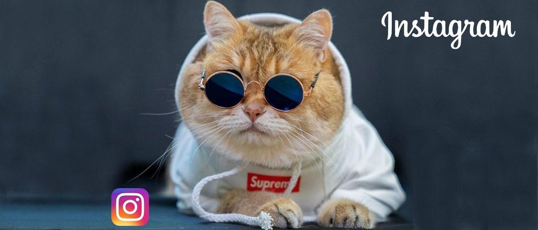 7 найкрасивіших кішок, у яких є свій Інстаграм
