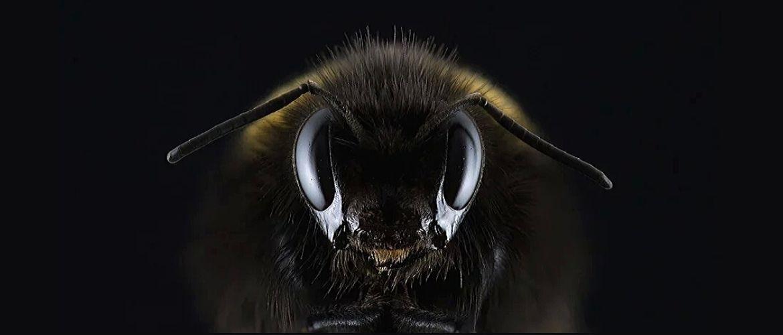 Опасные насекомые в лесу