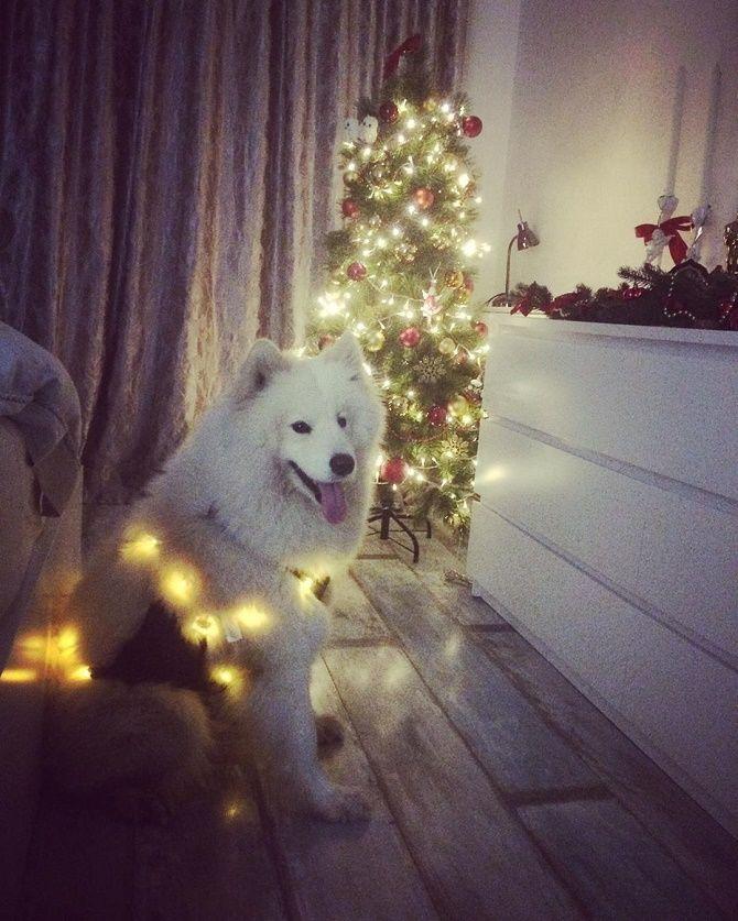елка и собака