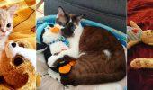 кошки с игрушками