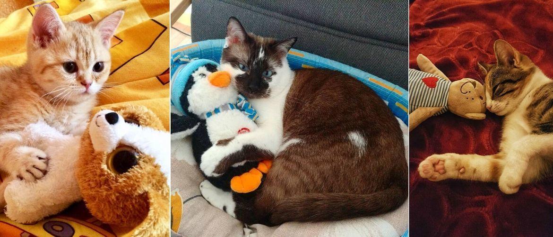 Наймиліші кішки, які дуже прив'язані до своїх іграшок