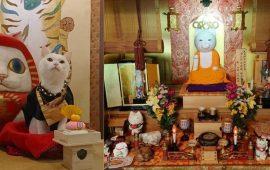 храм котов в киото