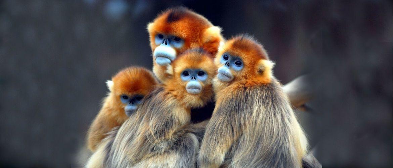 Незвичайні тварини, які ще раз підтверджують, що ми багато чого не бачили