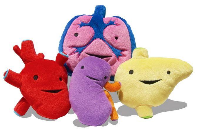 игрушечные человеческие органы