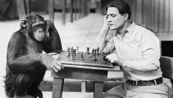 Експеримент з схрещуванням мавпи і людини