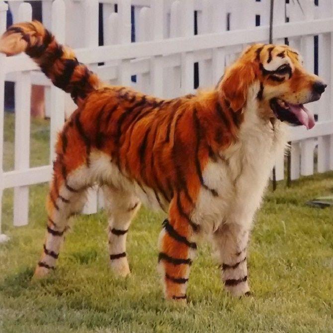стрижка собаки