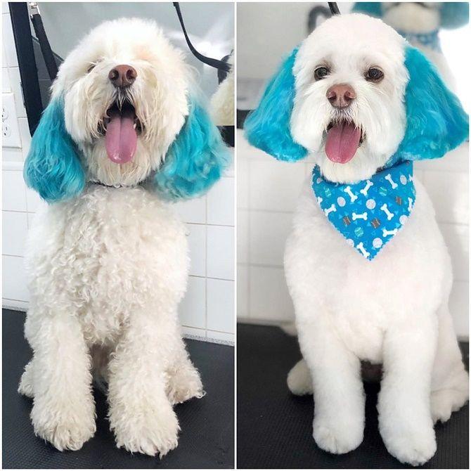 красивая стрижка собаки