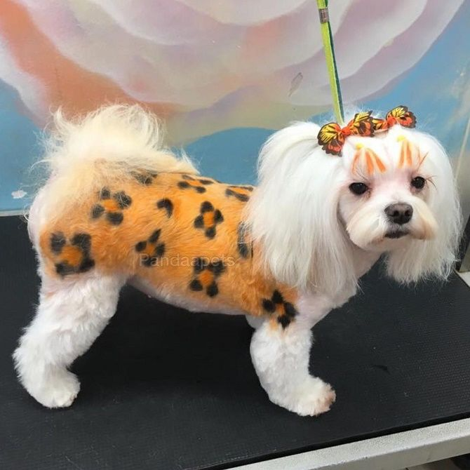креативные стрижки собак