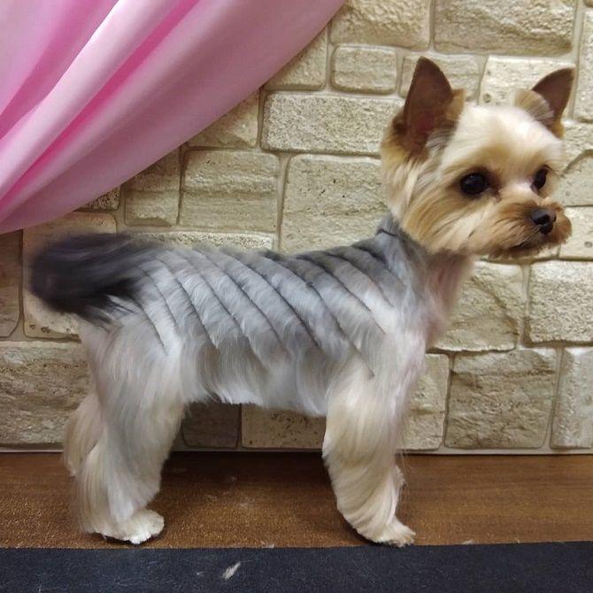 необычная стрижка собаки