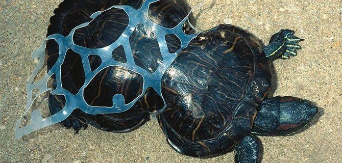 черепаха в пластике