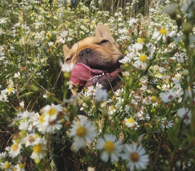пес в ромашках