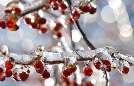 Тетянин день і День студента: традиції і що можна робити в свято 25 січня 2020 року
