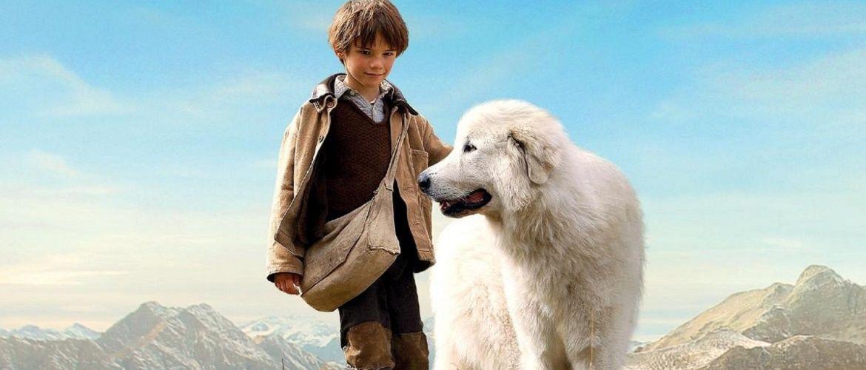 12 фильмов про собак, после которых захочется завести себе друга