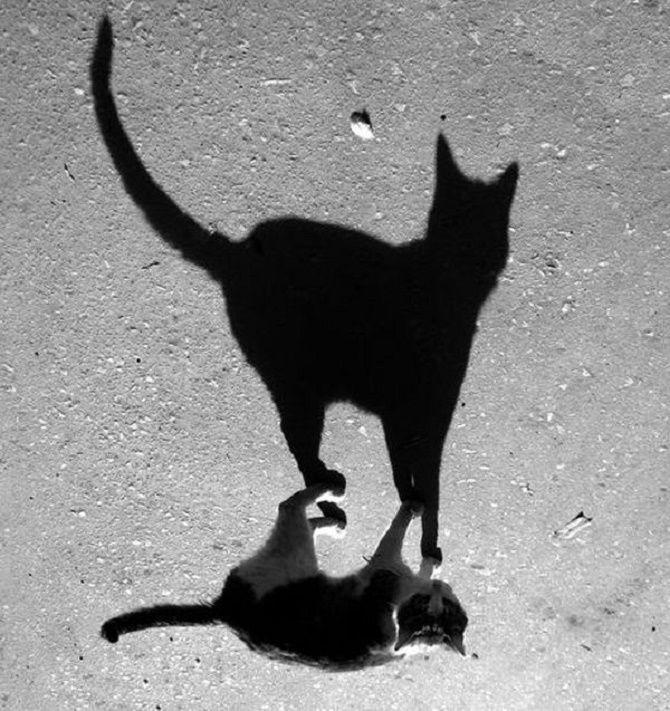 животные испугались тени