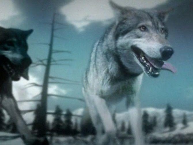 Поле битвы: волки