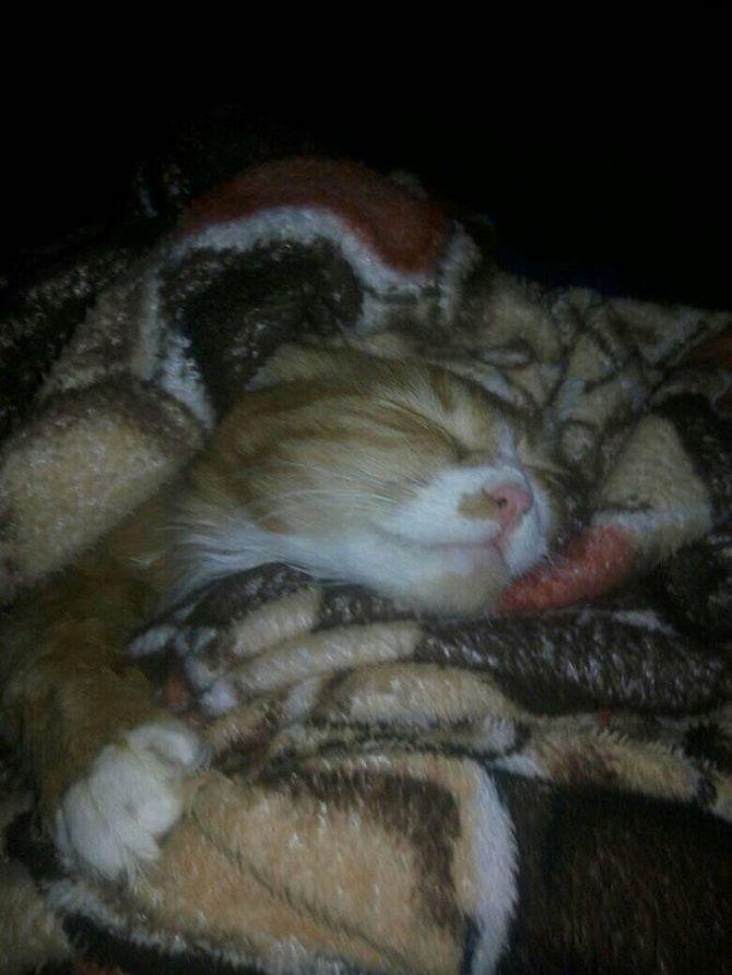the cat fell asleep