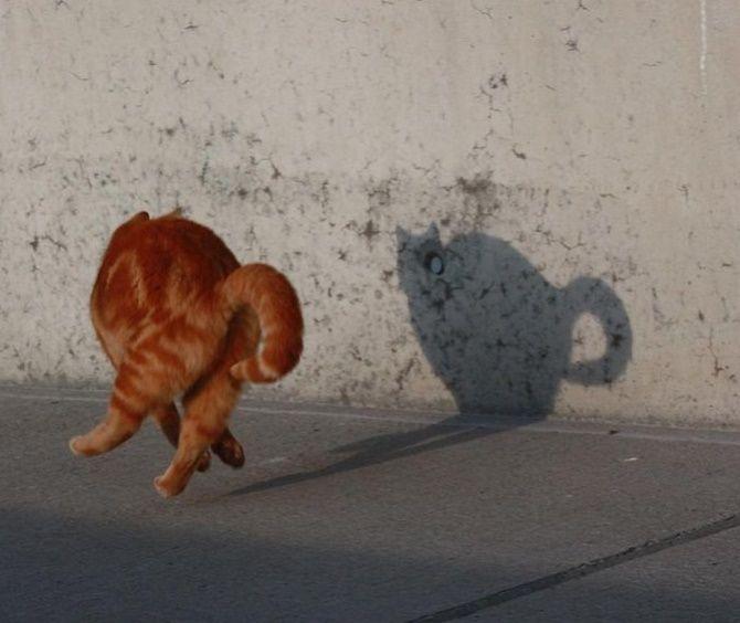 кошка испугалась тени