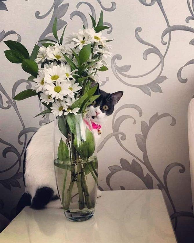 the cat hid