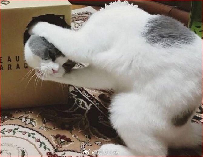 cat magician