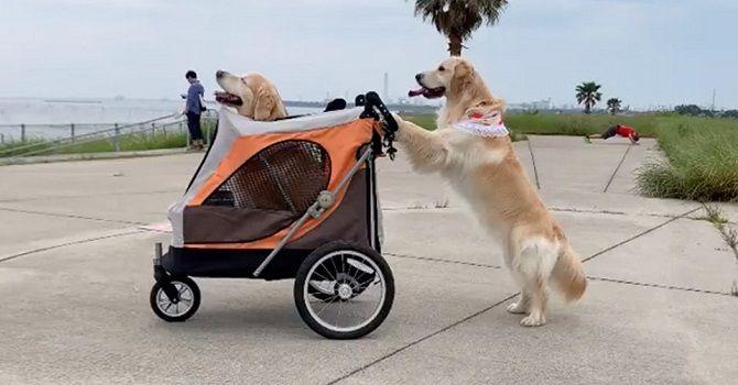 собаки допомагають одна одній