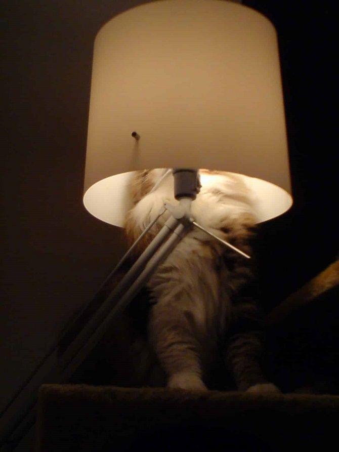кішка сховалась