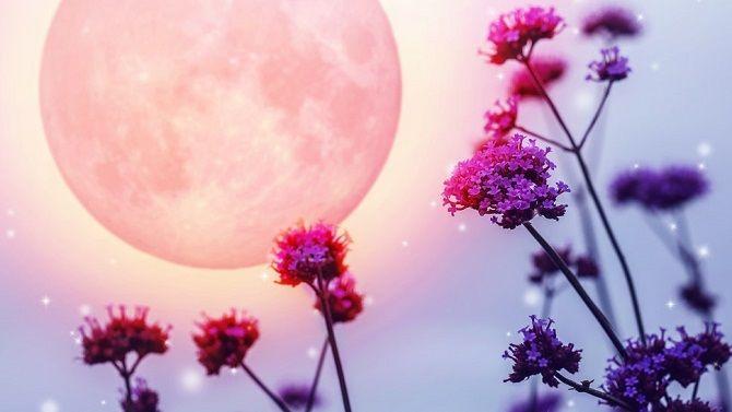 луна и цветы