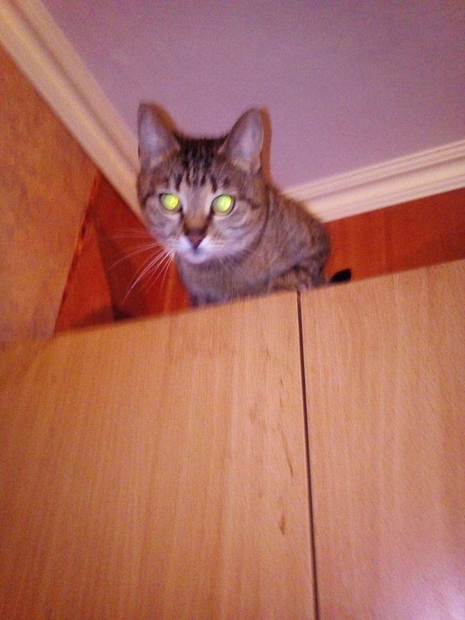 cat on the closet