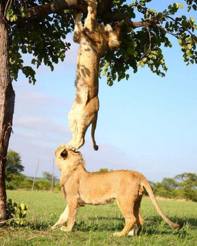 леви допомагають один одному