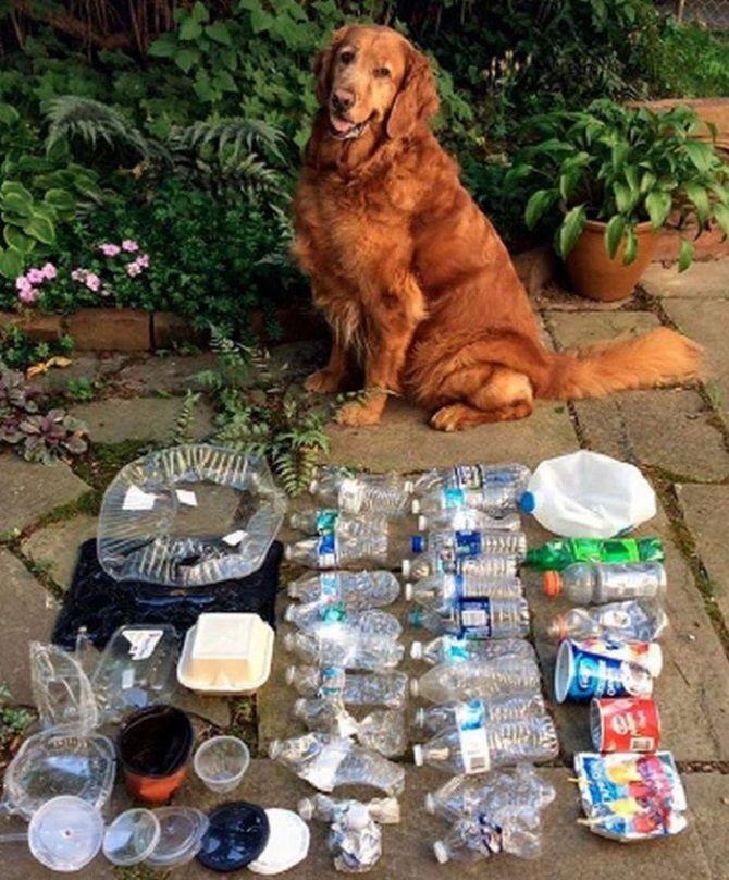 собака допомагає світу