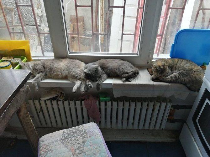 Sleepy trio