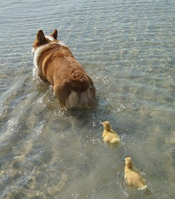 собака спасает птиц