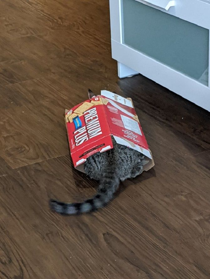 cat with crackers