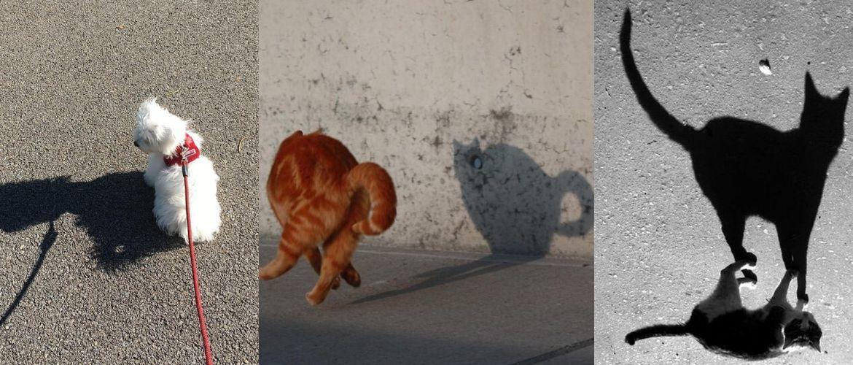 10+ животных, которые испугались своей тени