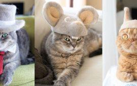 Модні котики японського дизайнера Ріо Ямазакі