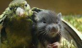 10+ животных, любви которых хватит на целый мир