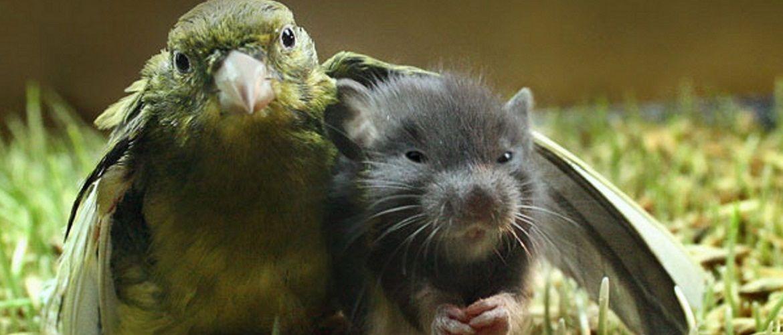 10+ тварин, любові яких вистачить на цілий світ