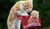 Самые заботливые мамы в мире животных, от нежности и ласки которых тепло на душе