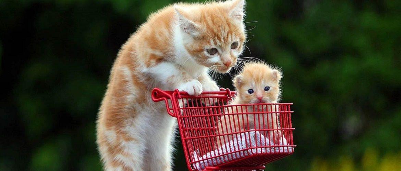 Найтурботливіші мами в світі тварин, від ніжності і ласки яких тепло на душі