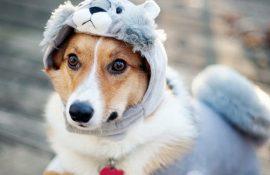 10+ животных в одежде, которые выглядят очень стильно
