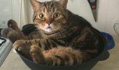 Проделки котов, которые заставляют нас посмотреть на них с совершенно другой стороны